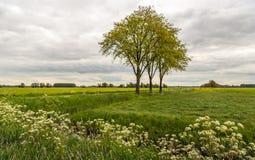 Gli alberi con il giovane germogliamento verde fresco lascia in una La olandese del ploder Fotografia Stock