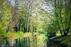 Gli alberi con la corteccia bianca (pioppo) si sviluppano sul lago Immagine Stock Libera da Diritti
