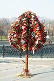 Gli alberi con le serrature. Immagine Stock Libera da Diritti