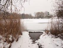 Gli alberi congelati della neve dell'inverno della superficie del lago ricopre con canne l'acqua immagine stock