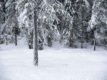 Gli alberi congelati nell'inverno freddo della foresta nevicano immagini stock