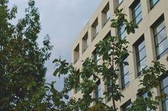 Gli alberi davanti alla biblioteca quadrata fotografia stock