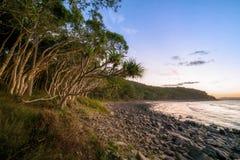 Gli alberi dei sabal allungano verso l'oceano Pacifico sopra una spiaggia pietrosa a Noosa, Queensland, Australia Fotografia Stock