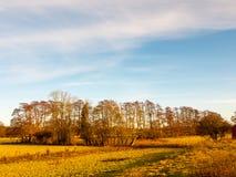 Gli alberi del campo del paesaggio del giorno del paese erba l'inverno di autunno Fotografia Stock