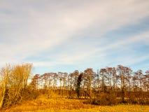 Gli alberi del campo del paesaggio del giorno del paese erba l'inverno di autunno Immagini Stock Libere da Diritti
