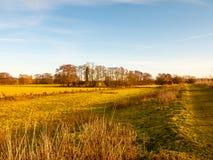 Gli alberi del campo del paesaggio del giorno del paese erba l'inverno di autunno Immagine Stock