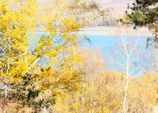 Gli alberi del paesaggio di autunno con giallo va contro il contesto di un fiume blu Immagine Stock Libera da Diritti