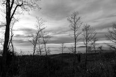 Gli alberi dell'inverno e scheletrici nella priorità alta e una valle hanno riempito da nebbia nei precedenti Fotografia Stock Libera da Diritti