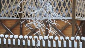 Gli alberi dell'inverno, ramo innevato ondeggia nel vento, precipitazioni nevose stock footage