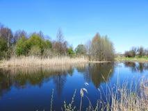 Gli alberi della primavera si avvicinano al lago, Lituania Immagini Stock Libere da Diritti