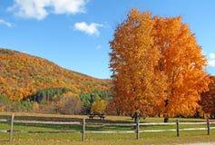 Gli alberi di acero e recintano la caduta, Plymouth, VT Immagini Stock