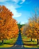 Gli alberi di autunno allineano una strada immagini stock libere da diritti