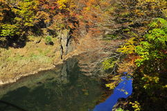 Gli alberi di autunno hanno riflesso nel fiume di Tonegawa Immagine Stock Libera da Diritti
