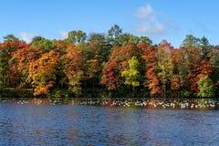 Gli alberi di autunno si avvicinano al lago Alberi con rosso, giallo e le foglie verdi Immagini Stock