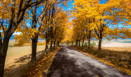 Gli alberi di autunno si avvicinano alla strada Fotografia Stock Libera da Diritti