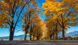 Gli alberi di autunno si avvicinano alla strada Fotografia Stock