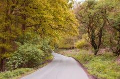 Gli alberi di autunno si scolano un vicolo del paese nella campagna britannica Fotografia Stock