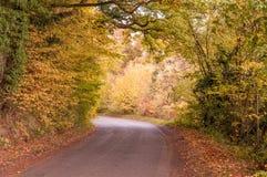 Gli alberi di autunno si scolano un vicolo del paese nella campagna britannica Immagine Stock Libera da Diritti