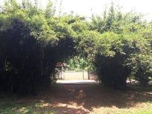 Gli alberi di bambù verdi rivela la bellezza della madre natura Fotografia Stock