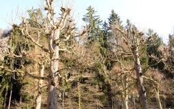 Gli alberi di dancing con mille armi Fotografia Stock Libera da Diritti