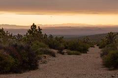 Gli alberi di Joshua ed altre piante del deserto si sviluppano lungo un lavaggio a secco all'alba nel deserto del Mohave fotografia stock