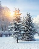 Gli alberi di Natale coperti di neve nella città parcheggiano Immagine Stock Libera da Diritti