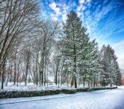 Gli alberi di Natale coperti di neve nella città parcheggiano fotografia stock
