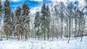 Gli alberi di Natale coperti di neve nella città parcheggiano fotografie stock