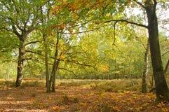Gli alberi di quercia ed attraccano Fotografie Stock Libere da Diritti