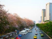 Gli alberi di rosea di Tabebuia o gli alberi di tromba rosa sono in fioritura lungo Th Fotografia Stock Libera da Diritti
