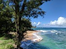 Gli alberi e la spiaggia con le onde lungo Hanalei costeggiano le Hawai, st unita Fotografia Stock
