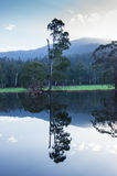 Gli alberi e le colline hanno riflesso in un lago vicino a Marysville, Australia Fotografia Stock