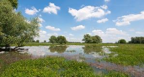Gli alberi e le nuvole riflessi nell'acqua sorgono Fotografia Stock Libera da Diritti