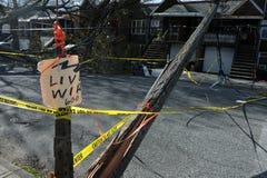 Gli alberi ed i pali elettrici hanno ritenuto giù alla terra Fotografia Stock Libera da Diritti