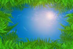 Gli alberi ed il cielo verdi della pianta della foglia si appannano il fondo Fotografie Stock