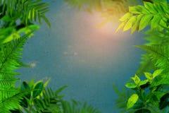 Gli alberi ed il cielo verdi della pianta della foglia si appannano il fondo d'annata Fotografie Stock
