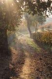 Gli alberi espongono al sole in campagna Immagine Stock