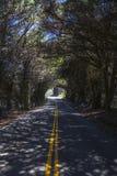 Gli alberi fanno il tunnel fotografie stock libere da diritti