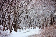 Gli alberi forestali dell'inverno ed il fiume congelato hanno coperto la neve Fotografia Stock