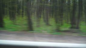 Gli alberi fuori della finestra dell'automobile archivi video