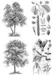 Gli alberi hanno isolato le immagini Fotografie Stock Libere da Diritti