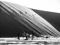 Gli alberi morti della spina del cammello in Deadvlei asciugano la pentola con suolo incrinato in mezzo alle dune rosse del deser immagini stock