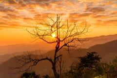 Gli alberi muoiono con luce solare di mattina Fotografia Stock Libera da Diritti