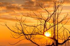 Gli alberi muoiono con luce solare di mattina Immagini Stock