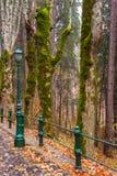 Gli alberi muscosi vicino alla pietra hanno pavimentato la via con vecchio stile della foresta me fotografie stock