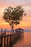 Gli alberi nell'acqua gradiscono un cuore L'albero di vista profila il reflectin fotografia stock