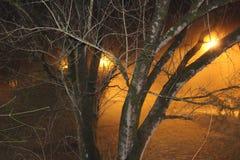 Gli alberi nell'incandescenza nebbiosa del parco si accende Fotografie Stock Libere da Diritti