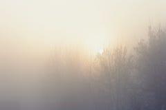 Gli alberi nell'umore, nella tristezza, nella apatia e nell'incertezza mistici misteriosi della foschia Fotografia Stock