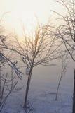 Gli alberi nell'umore, nella tristezza, nella apatia e nell'incertezza mistici misteriosi della foschia Immagine Stock Libera da Diritti