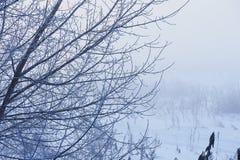 Gli alberi nell'umore, nella tristezza, nella apatia e nell'incertezza mistici misteriosi della foschia Fotografie Stock Libere da Diritti